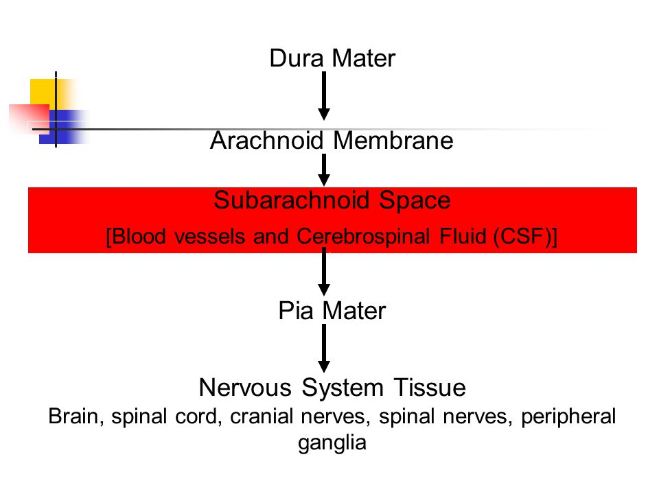 [Blood vessels and Cerebrospinal Fluid (CSF)]